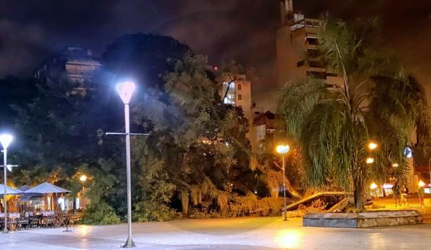 Fotos exclusivas: Cayó un imponente árbol en Plaza Cabral