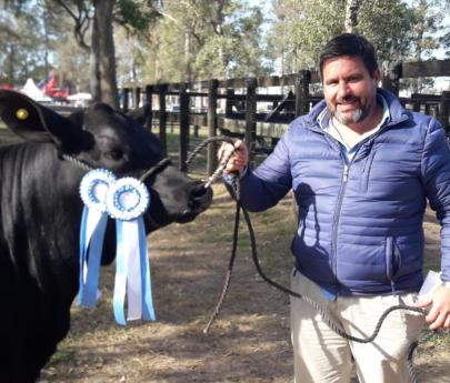 Chaco: cuatreros carnearon una vaca campeona valuada en 500 mil pesos