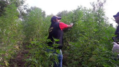 marihuana chaco 5.jpg