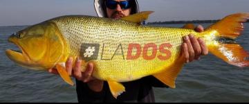 Dorado pesca