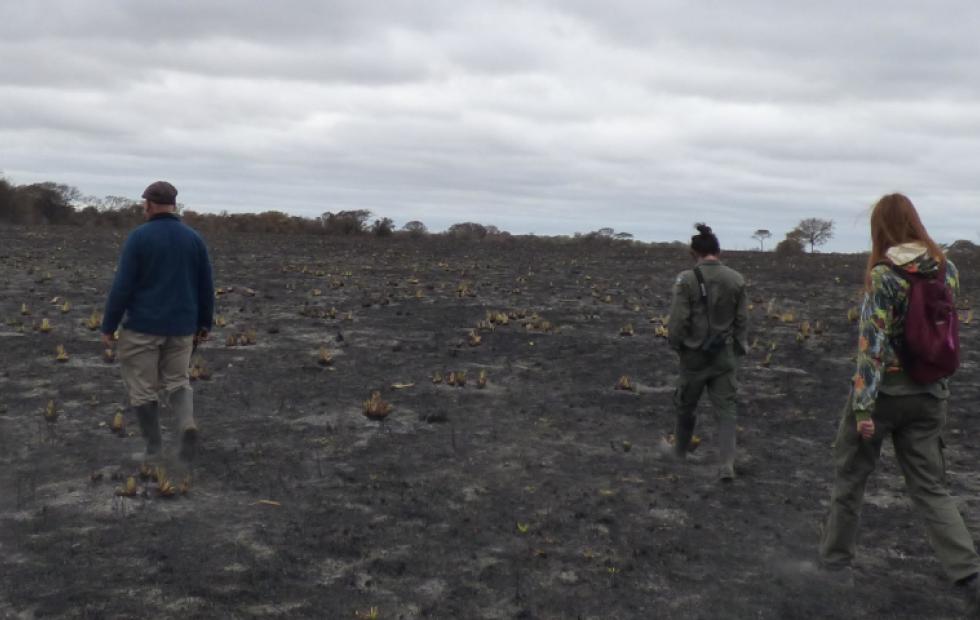 Catástrofe ambiental del Parque San Cayetano: Hay ayuda internacional pero surgen trabas para acceder a fondos