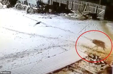 37662102-9117609-CCTV_footage_caught_the_moment_the_man_carrying_a_torch_was_atta-a-2_1609926613409.jpg