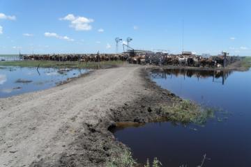 productores inundados.jpg