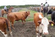 Mercedes: inicia la 14ª temporada de los remates para pequeños ganaderos