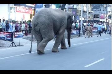 Wild elephant runs riot in Guwahati city of Assam