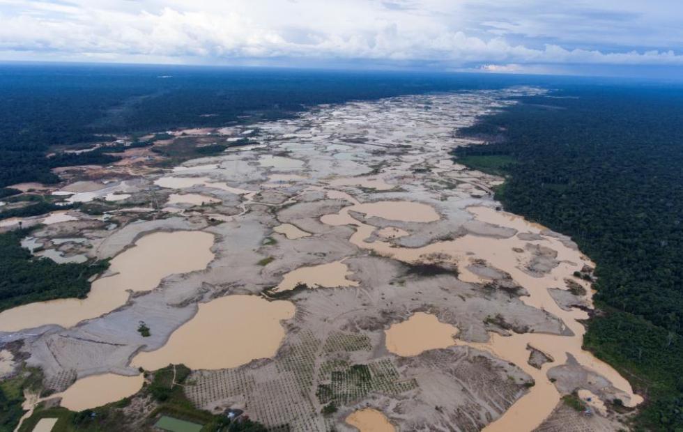 Medio ambiente en peligro: La deforestación en el Amazonas aumentó un 15 % en 12 meses