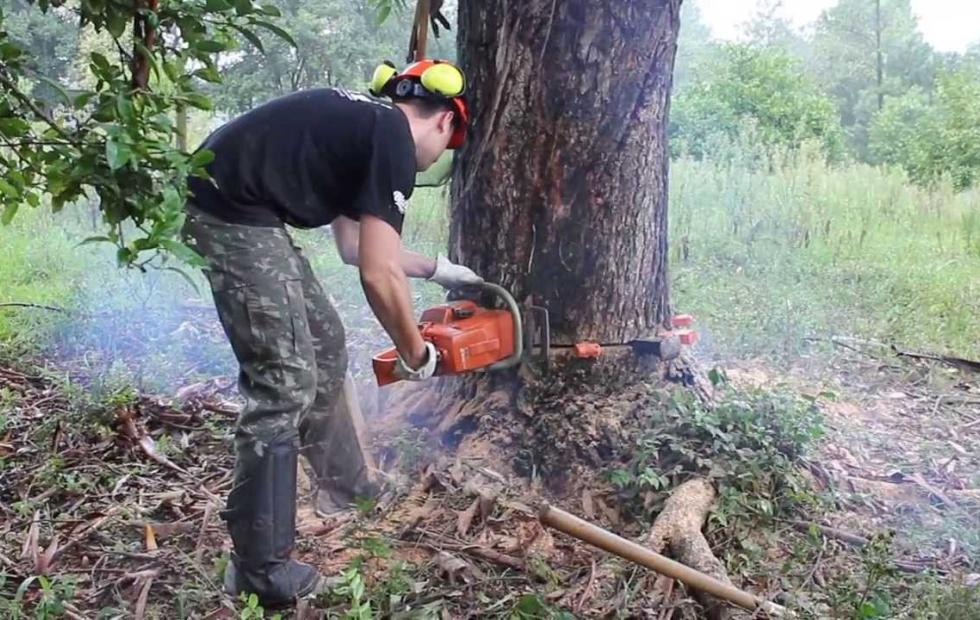 Un hombre murió aplastado cuando cortaba un árbol de eucaliptos