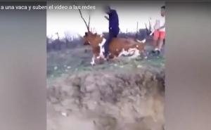 Unos adolescentes se grabaron pateando, apedreando y montando una vaca