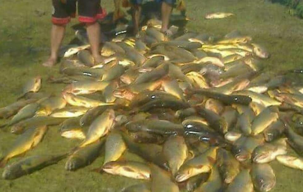 """Pesca en Corrientes: """"Hay una depredación del río Paraná nunca antes vista"""""""