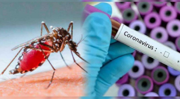dengue-coronavirus.jpg