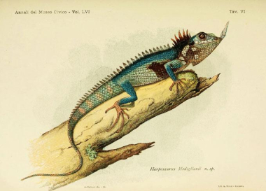 060320-dr-dragon-lizard-inline2-680.jpg