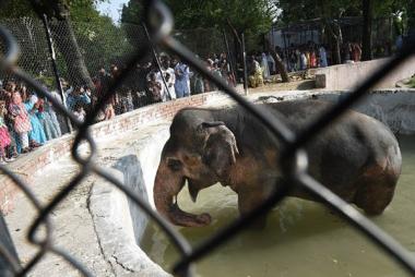 pakistan-kaavan-elephant.jpg