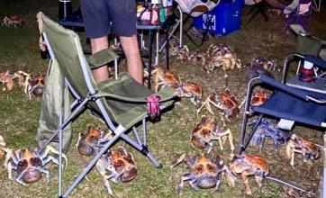 Hacían un asado en un camping y fueron invadidos por cangrejos carnívoros