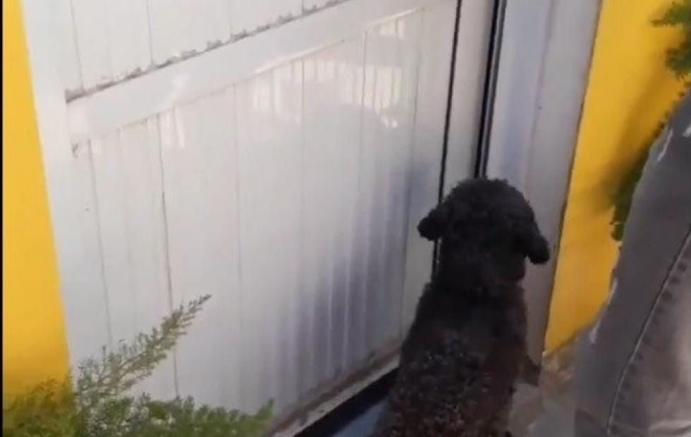 Video: Benito, el perro que no olvidó a su dueña
