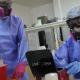 Testean mascotas para comprobar si se contagian coronavirus