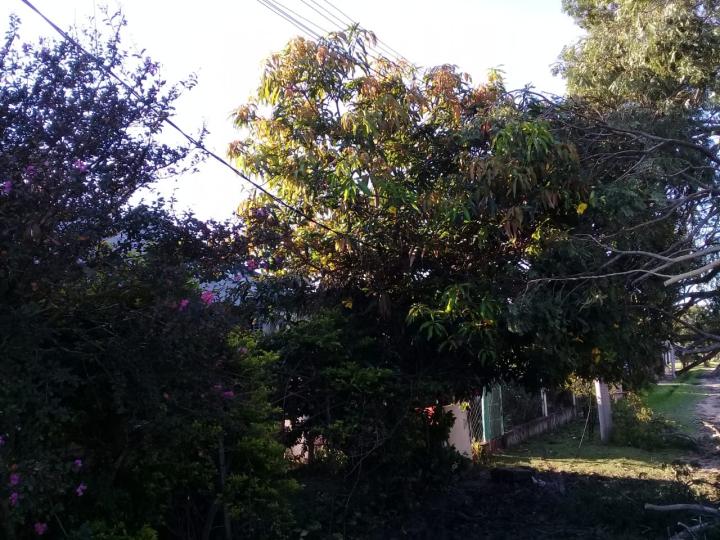 arbol caido temporal 3.jpg