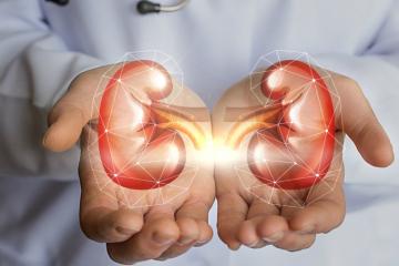 Funciones-de-los-riñones.jpg