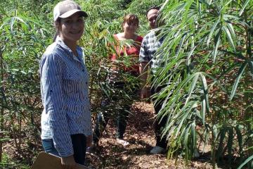 Proyecto batata-mandioca (3).jpeg