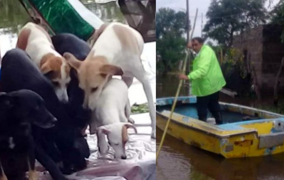 La emotiva historia del correntino que rescató perros abandonados por las inundaciones