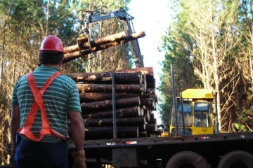 Industria forestal Corrientes