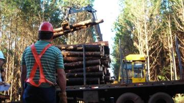 Industria forestal Corrientes