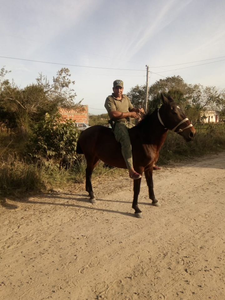 caballos robados.jpg