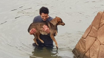 Corrientes viral perro  copy copy