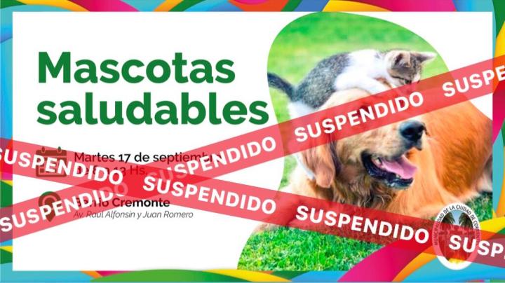 mascotas suspendidos.jpg