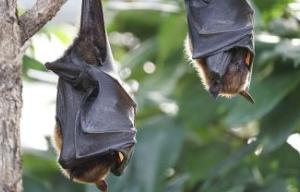 Corrientes: Mes de los Murciélagos en FaCENA