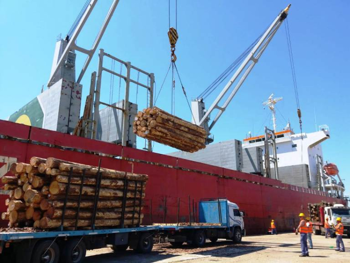 exportación madera.jpeg