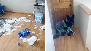 Dog Destroys Owners Quarantine Supplies