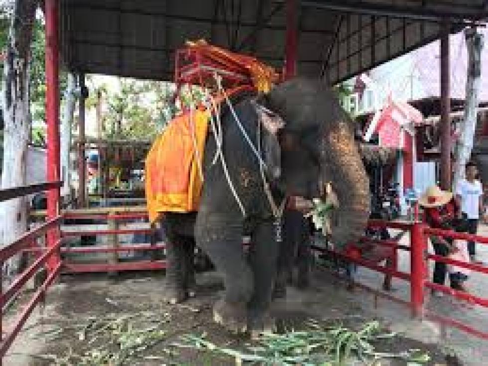 elefantes tailandia.jpg