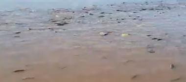 peces costanera.jpg