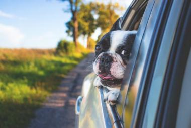 perro-en-el-coche-1024x683.jpeg