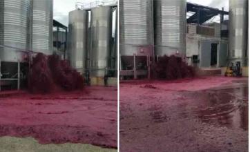 Reventó una bodega y se derramó más de 50 mil litros de vino